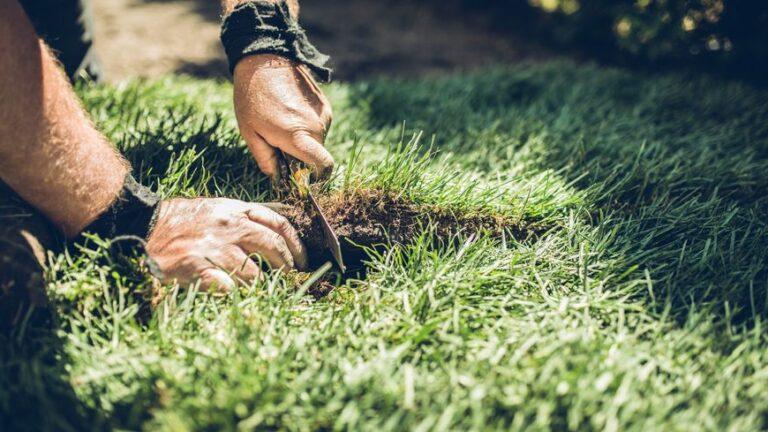 Trous dans la pelouse : reconnaître les animaux qui envahissent nos jardins