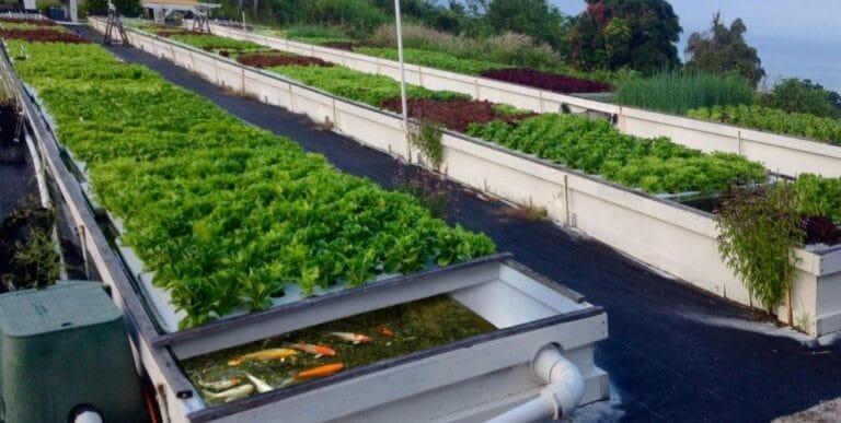 L'aquaponie : LA technique pour produire des plantes et des poissons en même temps