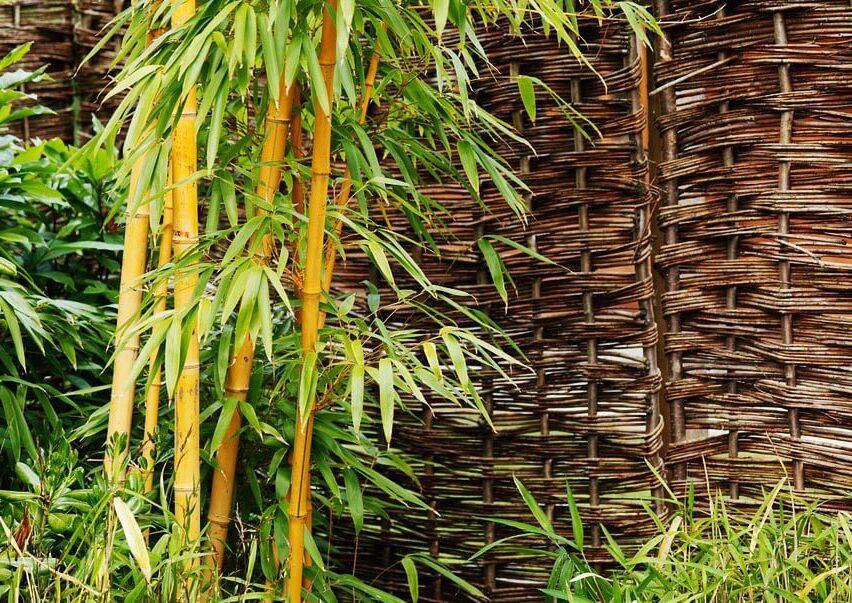 du bambou devant une cloture