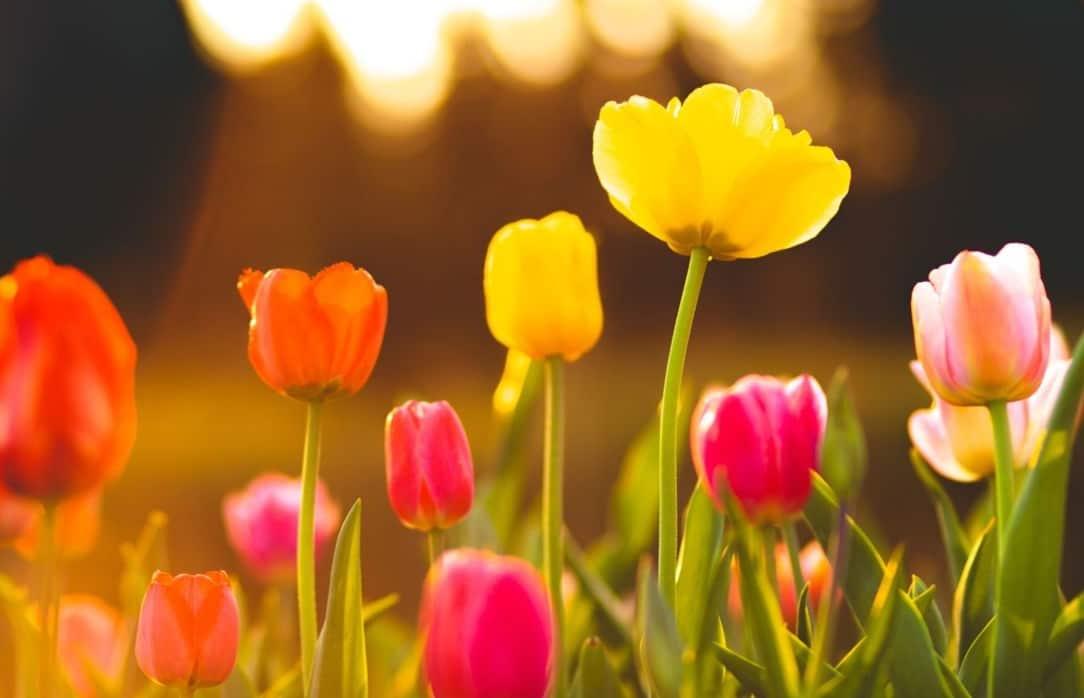 Fleurs colorées jardin
