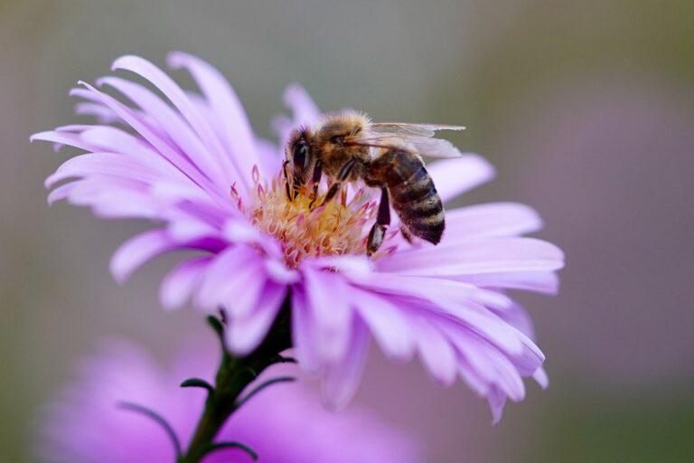 Comment reconnaître un nid d'abeilles et ses habitantes ?