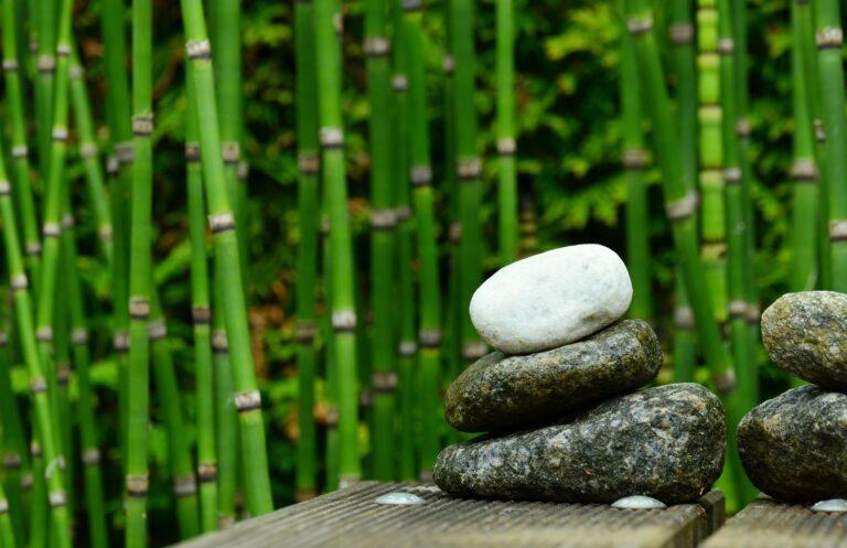 Comment se débarrasser des bambous dans votre jardin