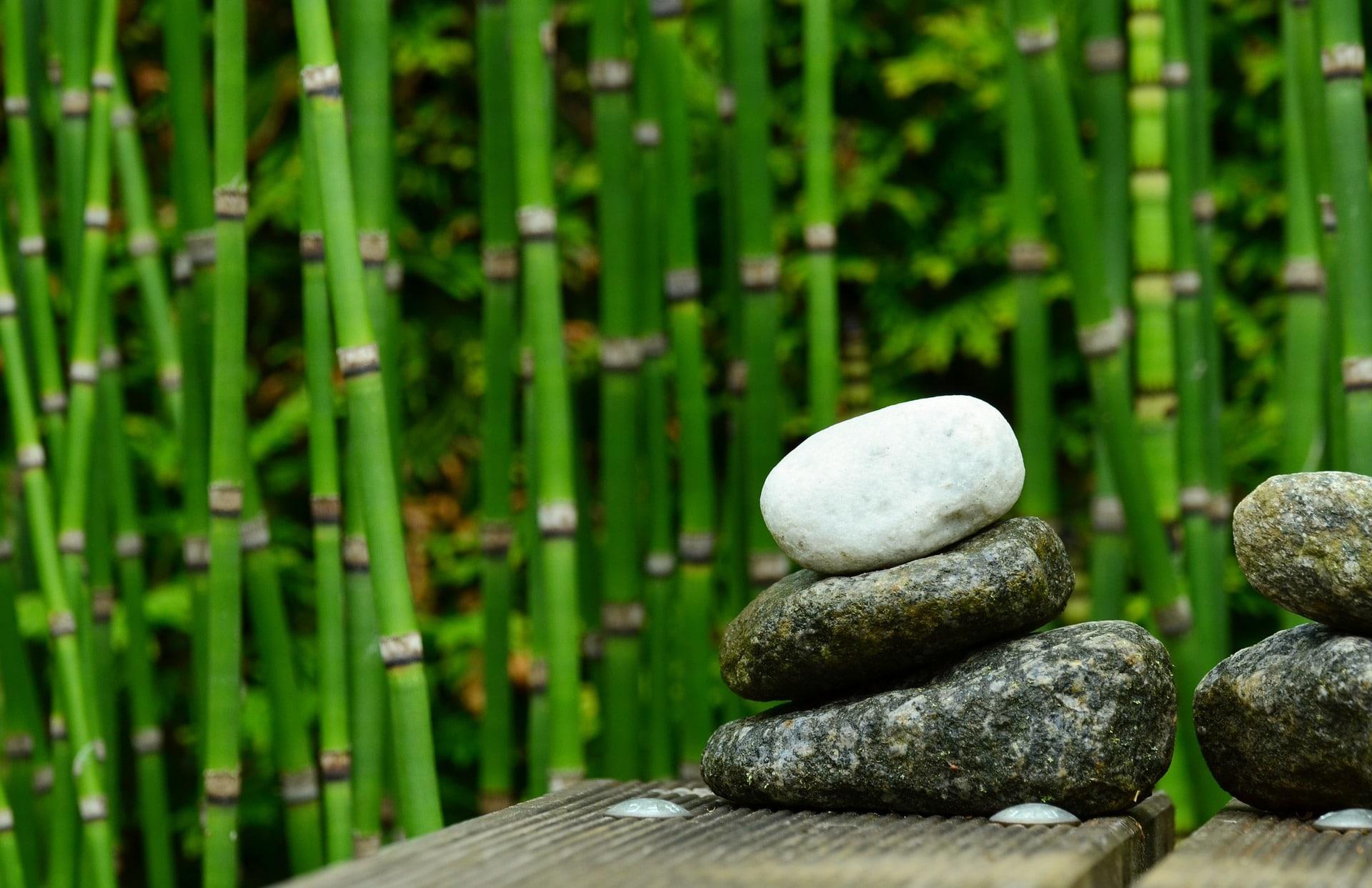 du bambou